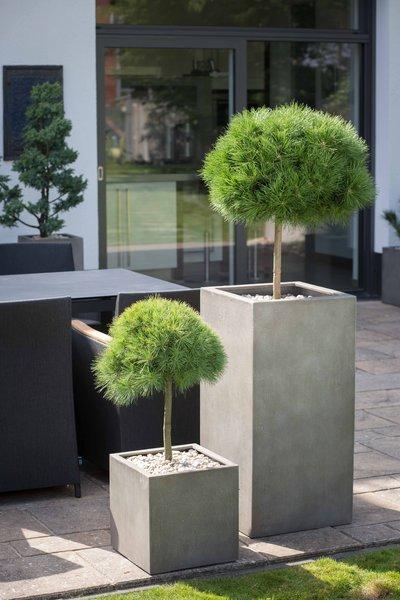 garten terrasse botanico pflanzen. Black Bedroom Furniture Sets. Home Design Ideas